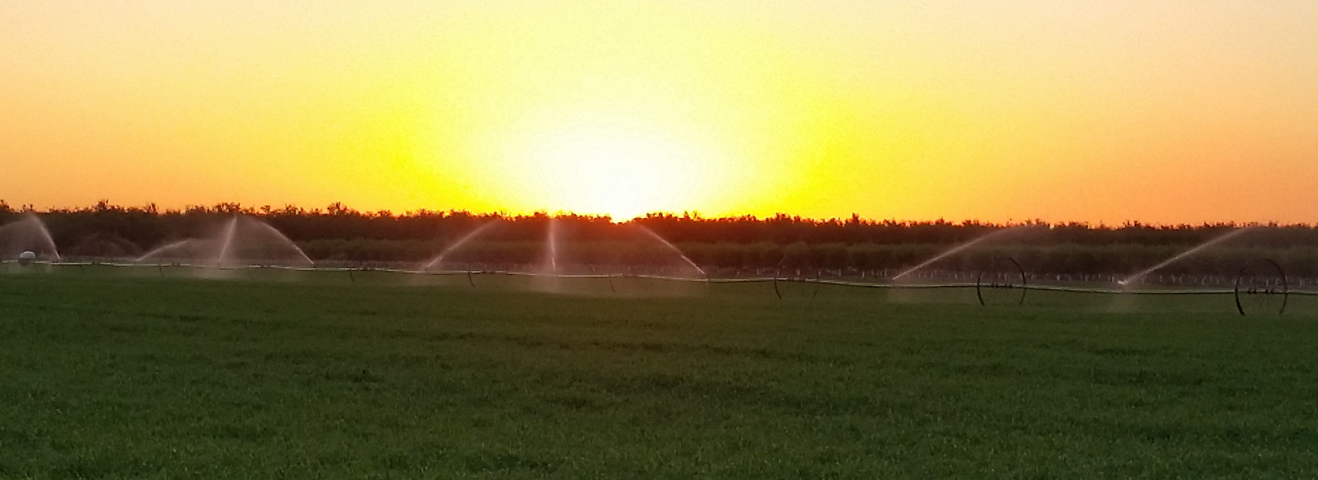 nicolau-farms-fields-at-sunset