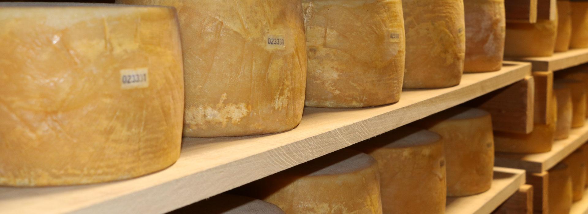 Nicolau Farms Cheese Aging Room